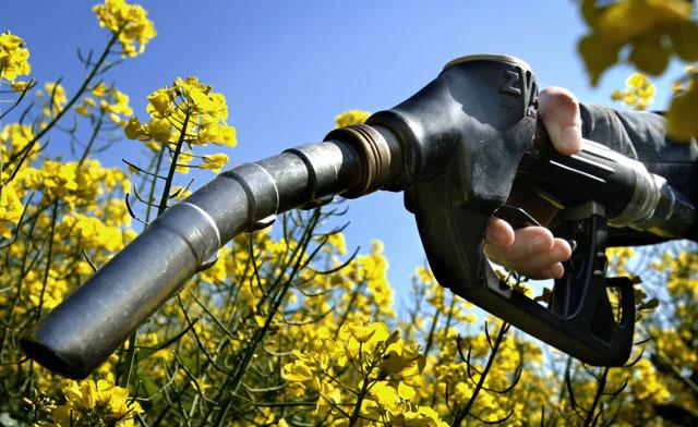 Biofuel là gì? Tìm hiểu về biofuel
