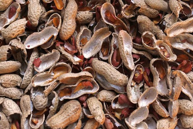 Vỏ đậu phộng có tác dụng gì? Tìm hiểu công dụng vỏ đậu phộng